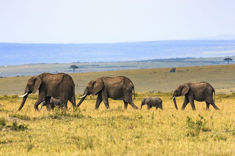 Day safari tours from Nairobi, Kenya